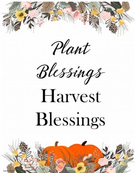 Plant blessings - harvest blessings